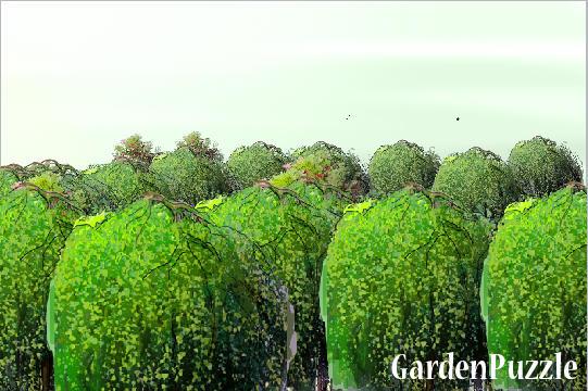 Projekt ogrodu las lisciasty wiosna