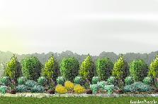Projekt ogrodu:Rabatka