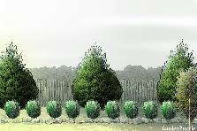 Projekt ogrodu:w rogu