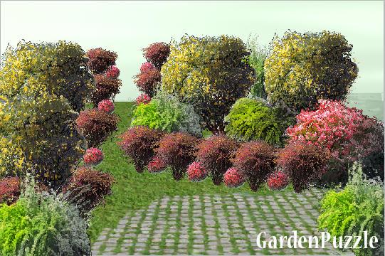 Projekt ogrodu berberysy wiosna