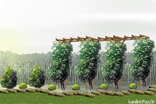 pnącze przy płocie - GardenPuzzle - projektowanie ogrodów