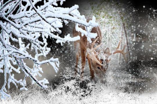 Projekt ogrodu:...zimowo