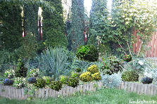 Projekt ogrodu:juka