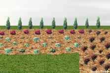 Projekt ogrodu:klomb wzdłuż ścieżki 3