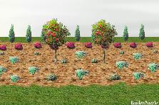 Projekt ogrodu:klomb srodek