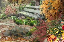 Projekt ogrodu:...w ogrodzie...przy samym lesie...