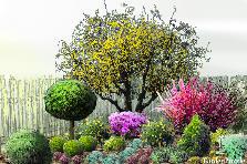 Projekt ogrodu:płot