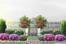 Projekt ogrodu:Wejście  przyrody